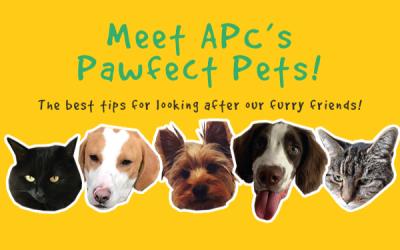 APC's Pawfect Pet Guide