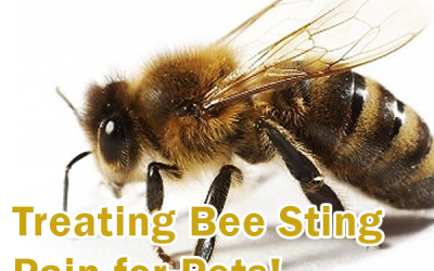 Treating A Bee Sting for Pets
