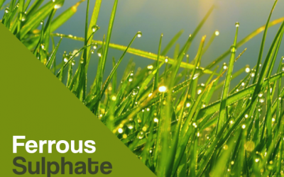 Ferrous Sulphate Uses