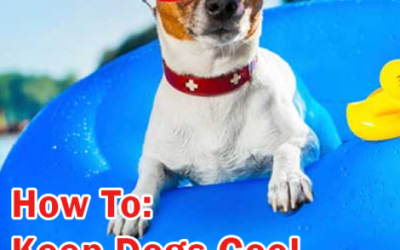 Keep Dogs Cool in Summer!